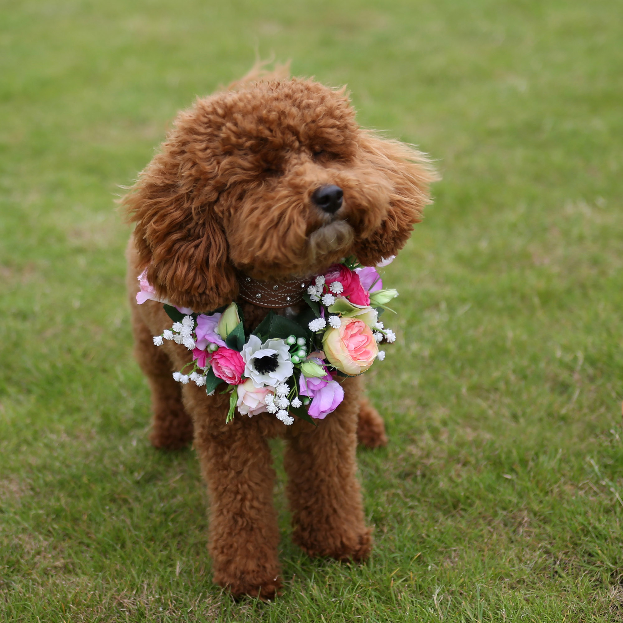 Pet Photography at Rebecca Dawe Photography